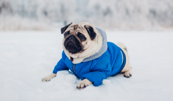 Why Your Dog May Not Like Clothes (At First)