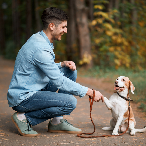 Why is Dog Training Important?