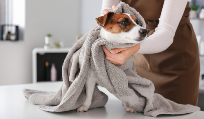 Top 5 Tips to Keep Your Dog Healthy This Winter