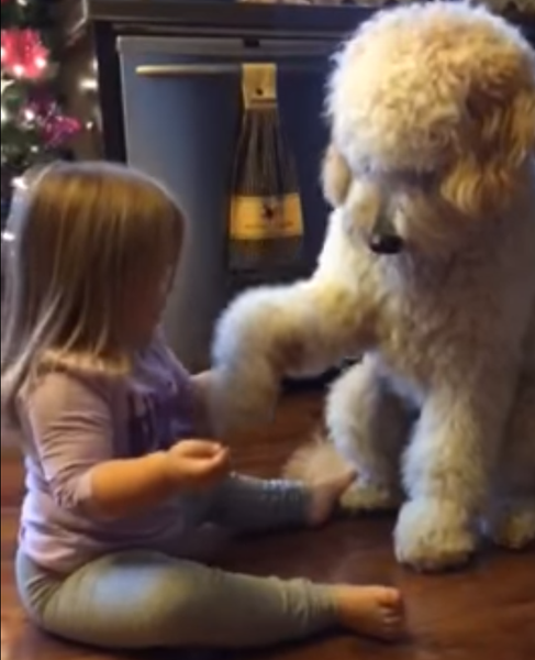 Little Girl Teaches Dog How to Shake Hands