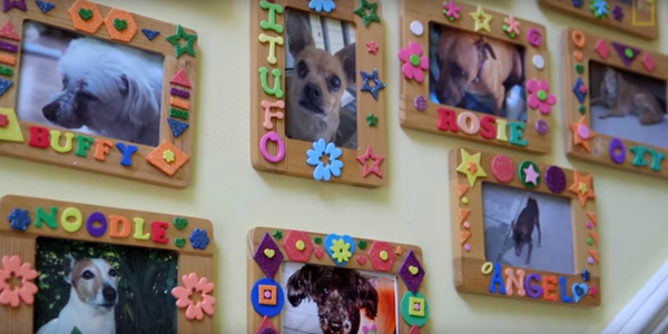 Compassionate Woman Opens A Dog Retirement Home