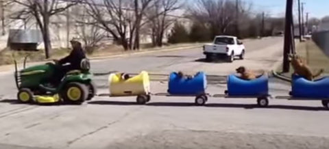Man Builds a Dog Train for Rescued Pups
