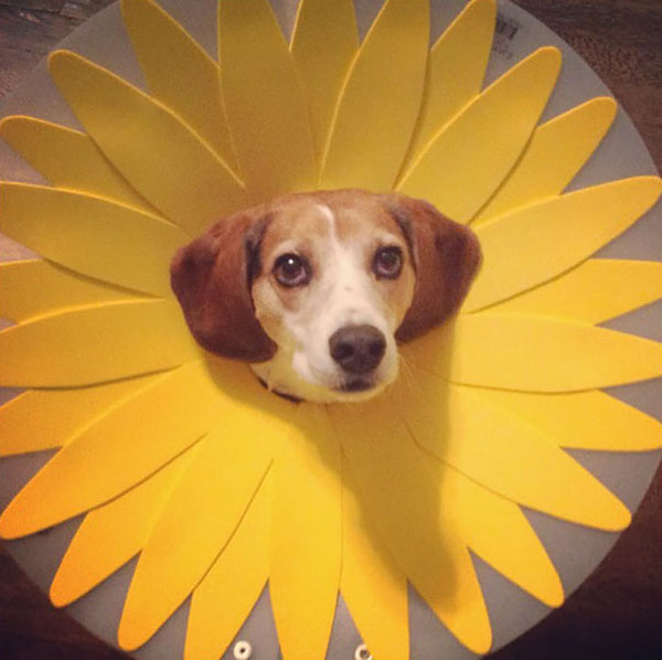 the flower cone of shame