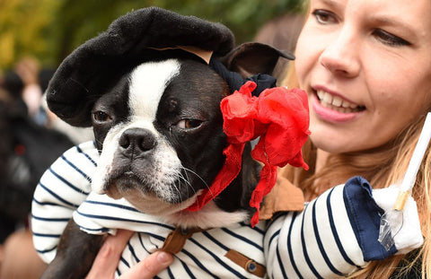 French Bulldog Halloween Costume