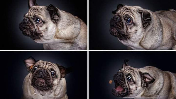Hilarious Images of Dogs Catching Treats by Christian Veiler
