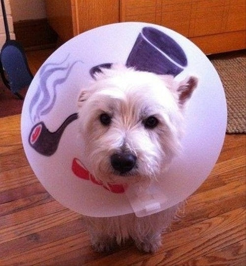 like a sir cone of shame