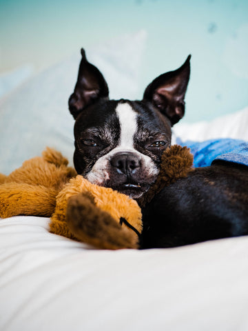 The Best Dog-Friendly Hotels Plush Paws Products