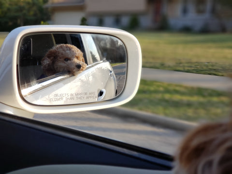 How to Travel with a Dog in a Car Plush Paws Products