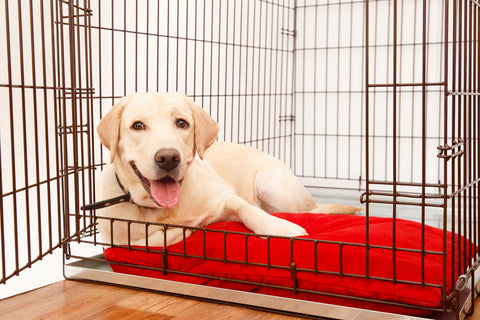 How to Crate Train a Dog for Potty Training Plush Paws Products
