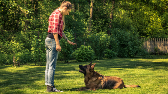 What Should I Look for in a Dog Trainer: Various Training Methods