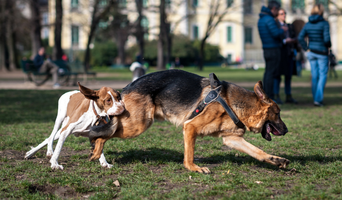 Top 5 Reasons Why Dog Parks are Important for Dogs and Humans