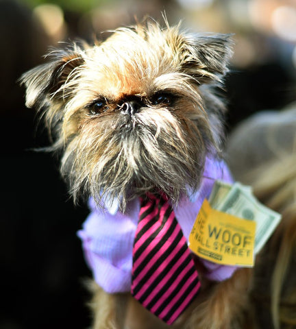 Woof of Wall Street