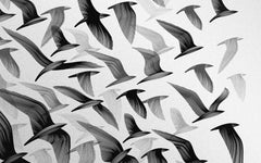 A greyscale representation of a flock of birds against a white background