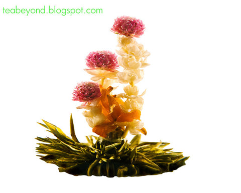 flowering tea blooming tea tea flowers blossoming tea tea balls tea beyond teavana tea forte