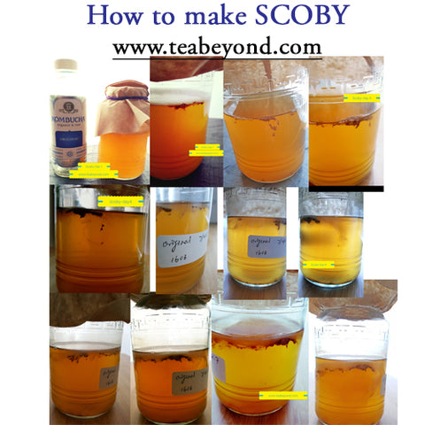 How to make homemade SCOBY tutorial