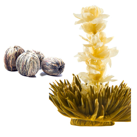 Blooming tea Jasmine 4 Cts