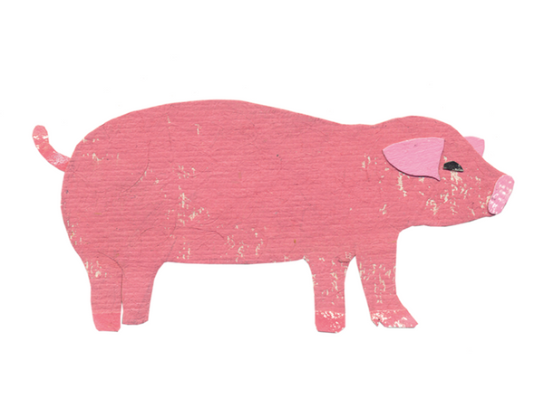 P is for Pig