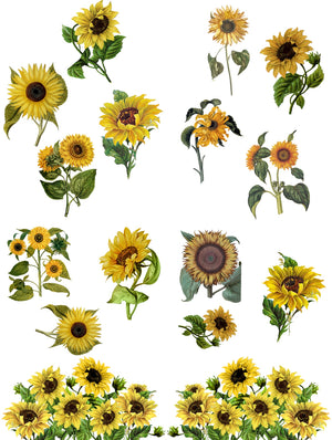 Dixie Belle Paint Decor Transfers, Belle and Whistles Decor Transfers available from approved online retailer and premium UK stockist based in Kent, Sunflowers