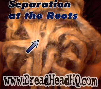 separated dreadlocks roots