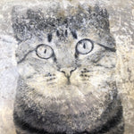 Black And White Filled Crushed Velvet Cushion - Cat