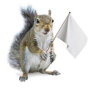 TIPS FOR STOPPING SQUIRRELS ON BIRD FEEDERS