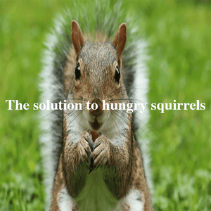 4 ways that do NOT stop squirrels eating bird food & the solution!