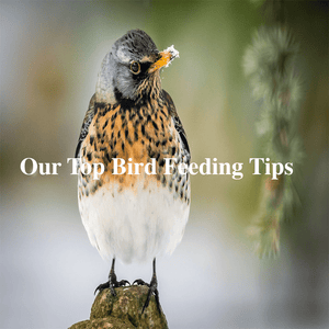 Our Top Bird Feeding Tips For Winter!