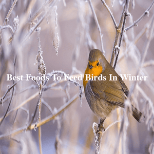 What are the best foods to feed birds in the winter?