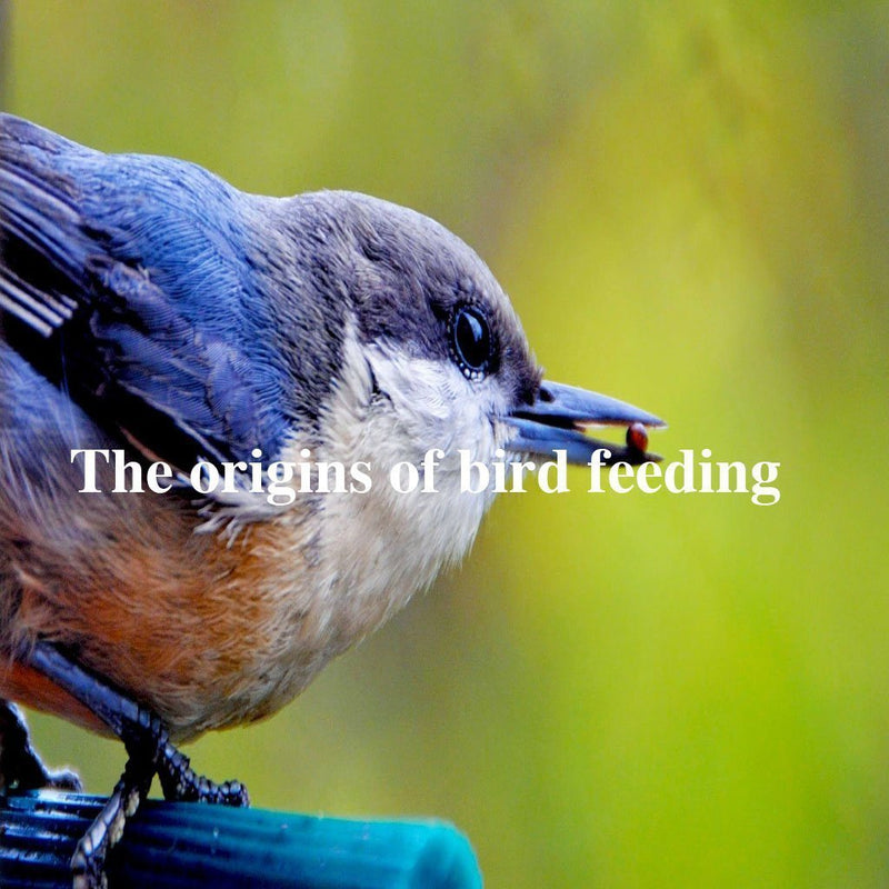 The origins of bird feeding