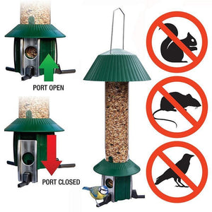 Deterring Squirrels – Red Native Squirrels and Squirrel Proof Bird feeders
