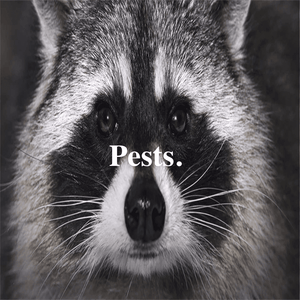 Do you know how much those pests weigh?