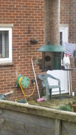 Can you name this British Songbird feeding on the PestOff Bird Feeder?