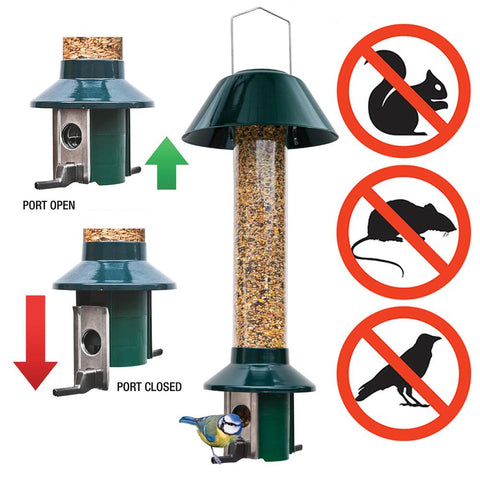 Why We Love The PestOff Bird Feeder (And You Should Too)