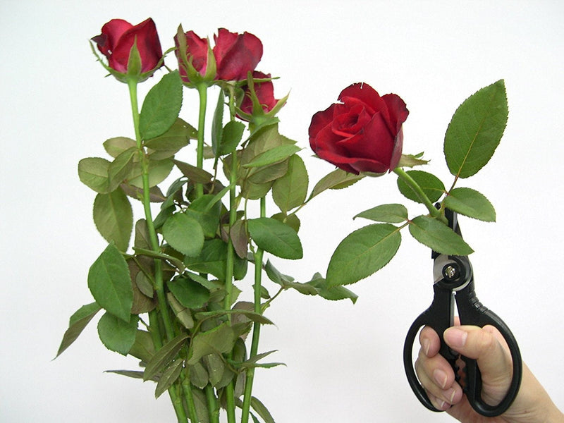 Cut & Hold - Rose Gatherer Pruner Scissors Secateurs - Black