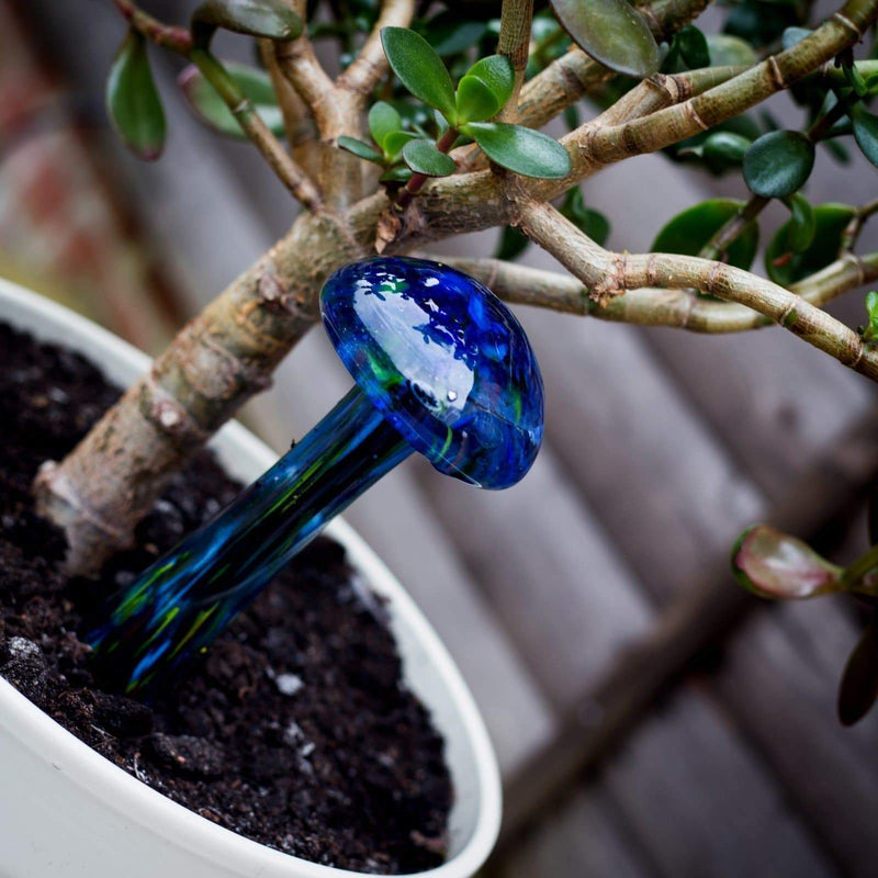 Blue Illuminarie Plant Quencher