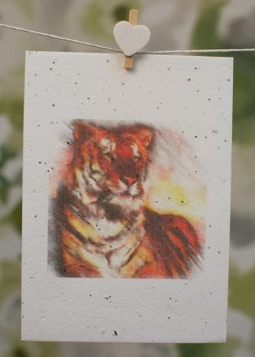 tigers on a card