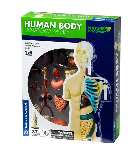 Human Body Anatomy