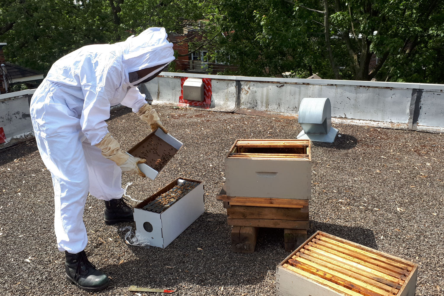 Moving bees from nuc box into hive