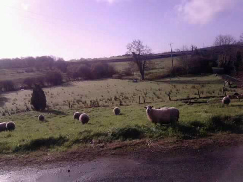View from Rachel's office: Irish lawnmowers