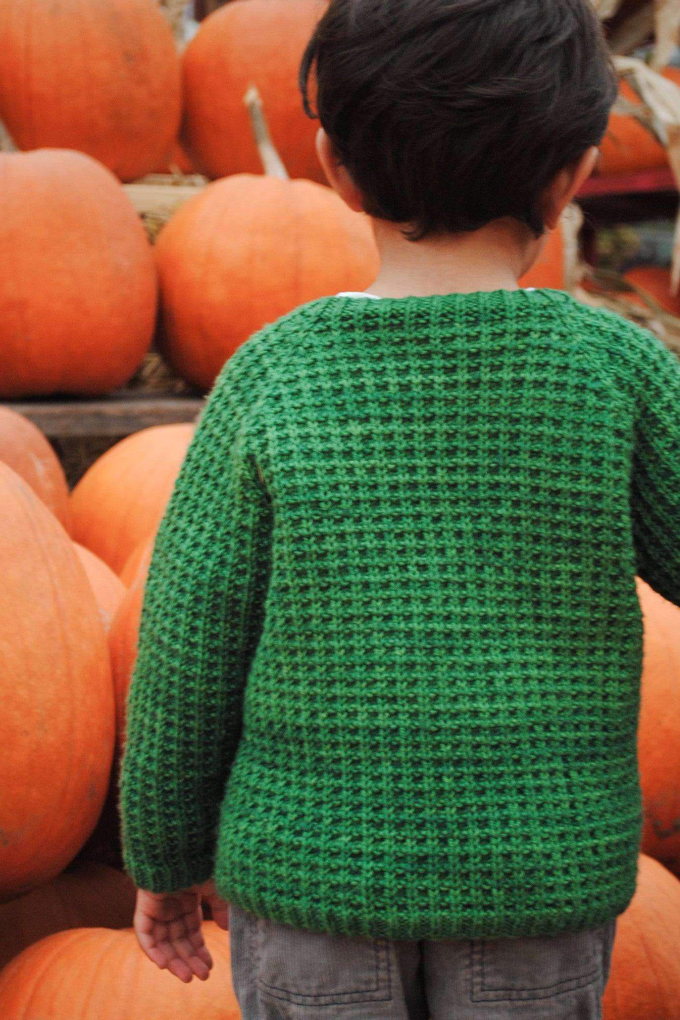 Bur Oak Raglan sweater back view