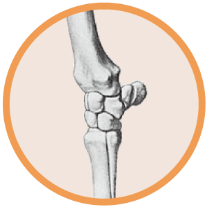 Horse Bone and Joint Health Icon