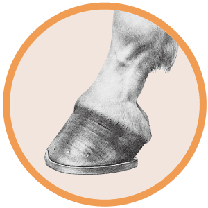 Horse Hoof and Hair Health Icon