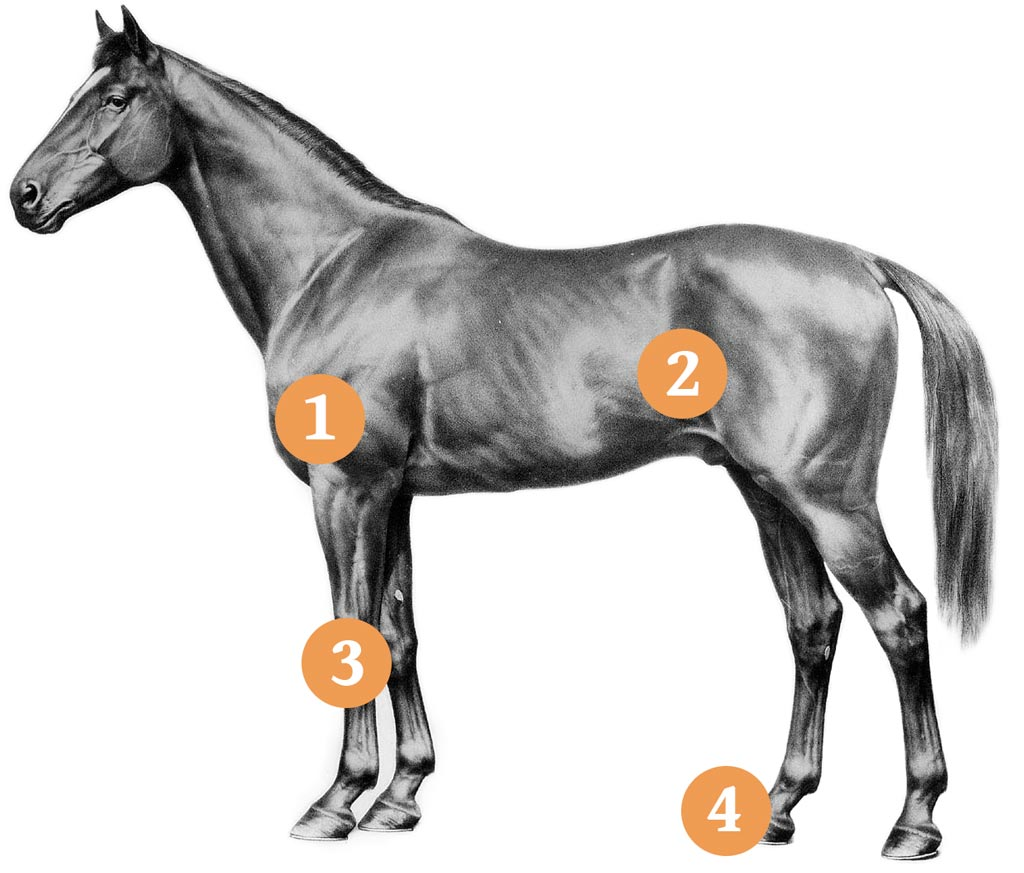 Healthy Horse Diagram