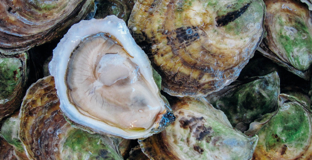 Our Favorite New England Oysters