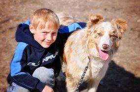Interesting Facts About the Collie Breed