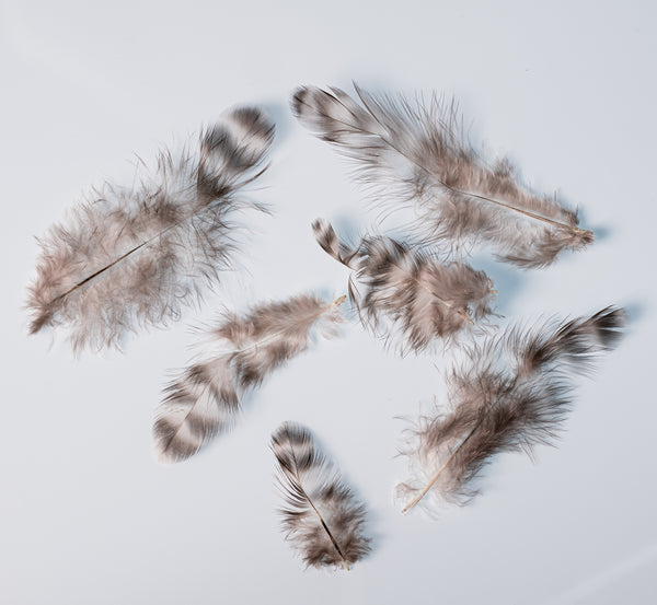 Chinchilla Schlappen Hat Feathers