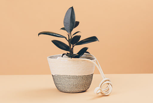 Hanging Planter - Black