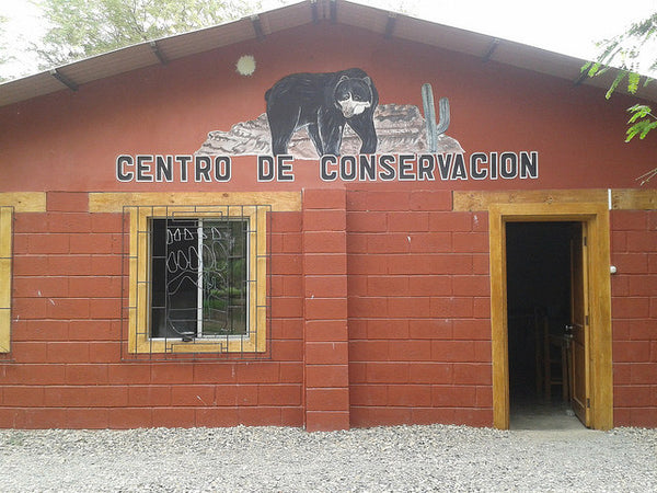the spectacled bear conservation society, spectacled bears peru