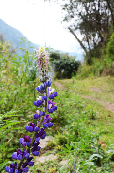 Andean Flower
