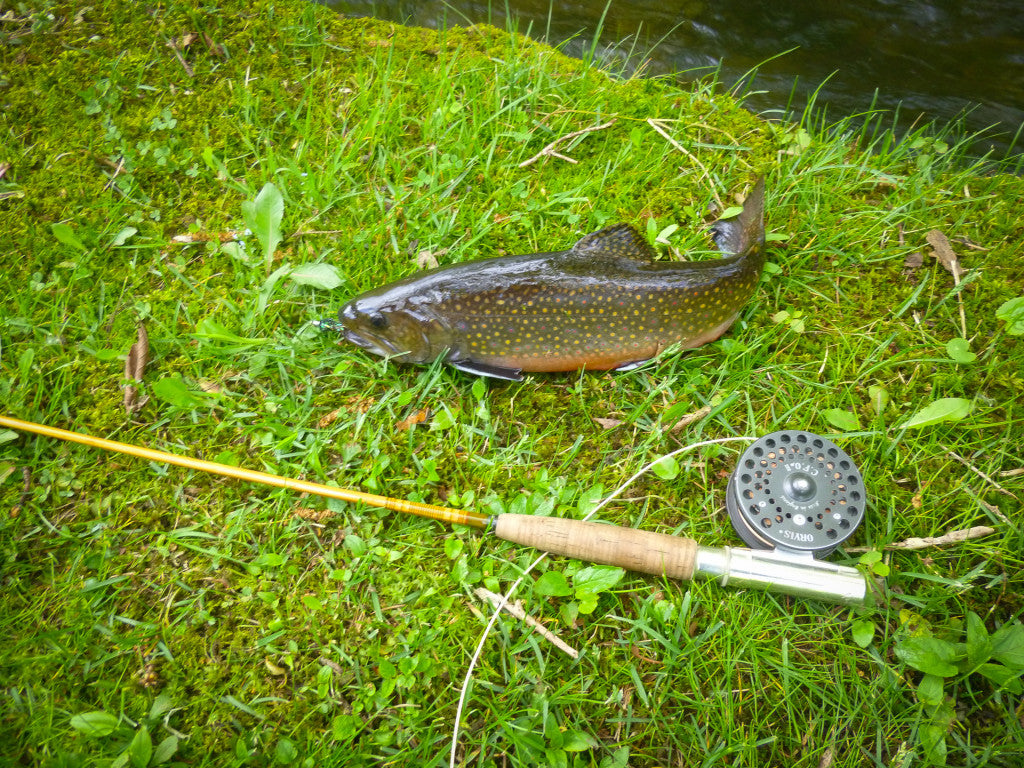 Aroner Brook Trout-2